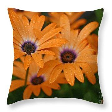 Orange Gazania Throw Pillow by Cindy Lee Longhini