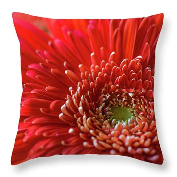 Throw Pillow featuring the photograph Orange Gerbera by Clare Bambers