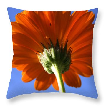 Orange Gerbera Flower Throw Pillow