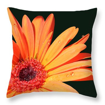 Orange Gerbera On Black Right Side  Throw Pillow by Cathy  Beharriell