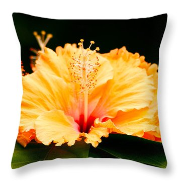 Throw Pillow featuring the photograph Orange Hibiscus by Rob Tullis