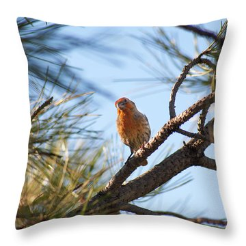 Throw Pillow featuring the photograph Orange House Finch 2 by Marilyn Hunt