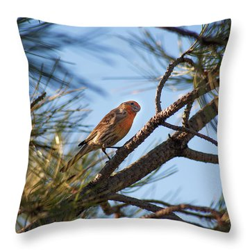 Throw Pillow featuring the photograph Orange House Finch by Marilyn Hunt