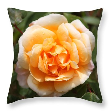 Orange Rose Square Throw Pillow by Carol Groenen