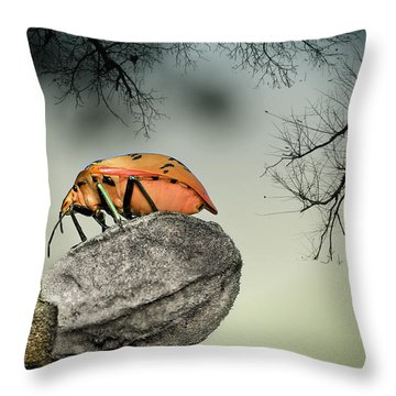 Orange Stink Bug 001 Throw Pillow by Kevin Chippindall