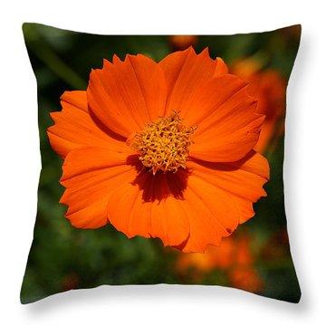 Orange Sulfur Cosmos Flower Throw Pillow