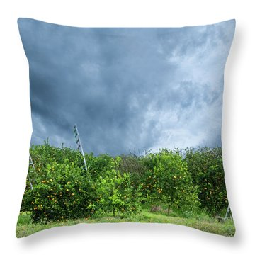 Orange Tree Throw Pillow by Carolyn Dalessandro