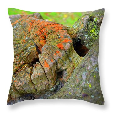 Orange Tree Stump Throw Pillow