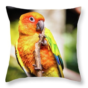 Orange Yellow Parakeet Throw Pillow by Stephanie Hayes