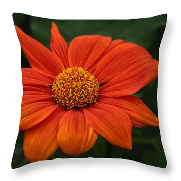 Orange You Pretty Throw Pillow