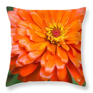 Orange Zinnia After A Rain Throw Pillow