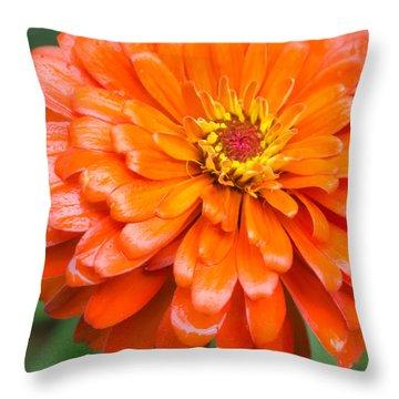 Orange Zinnia After A Rain Throw Pillow
