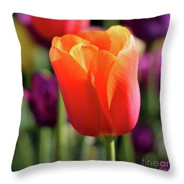 Orange Tulip Square Throw Pillow