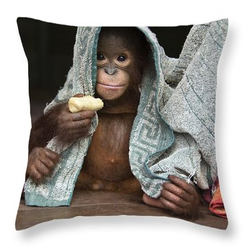 Orangutan 2yr Old Infant Holding Banana Throw Pillow by Suzi Eszterhas