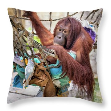Orangutan In Rope Net Throw Pillow by Stephanie Hayes