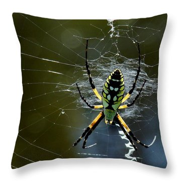 Orb-weaver 2 Throw Pillow by Bruce W Krucke