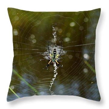 Orb-weaver Web Throw Pillow by Bruce W Krucke