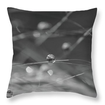 Throw Pillow featuring the photograph Orbit  by Connie Handscomb