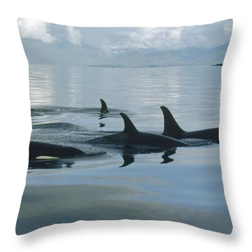 Throw Pillow featuring the photograph Orca Pod Johnstone Strait Canada by Flip Nicklin