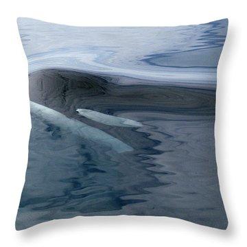 Orca Surfacing Southeast Alaska Throw Pillow by Flip Nicklin
