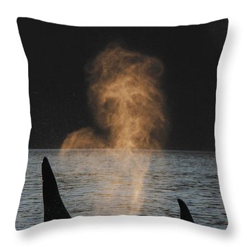 Orcas Ocinus Orca Spouting Alaska Throw Pillow by Hiroya Minakuchi