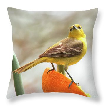 Throw Pillow featuring the photograph Orchard Oriole by Debbie Stahre