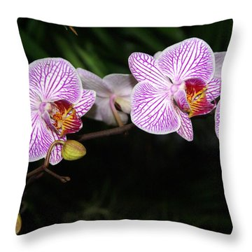 Orchid 2 Throw Pillow by Marty Koch
