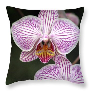 Orchid 22 Throw Pillow by Marty Koch