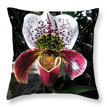 Orchid  Throw Pillow by Don Wright