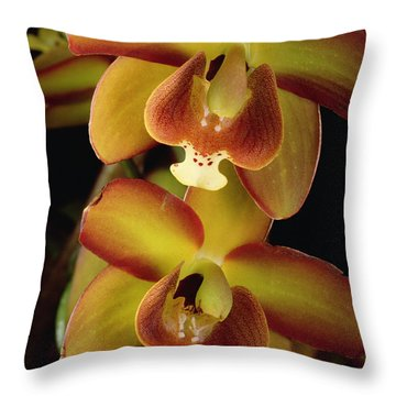 Orchid Eriopsis Sceptrum, Sipapo Tepui Throw Pillow by Mark Moffett