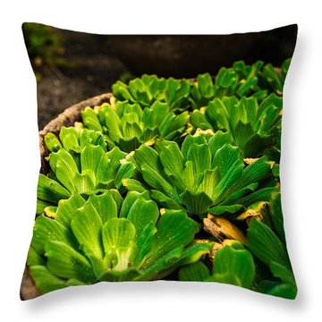 Orchid Pond Throw Pillow