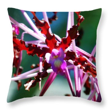 Orchid Spider Throw Pillow by Karen Wiles