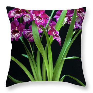 Orchids Miltonia Throw Pillow
