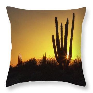 Organ Pipe Cactus Throw Pillow