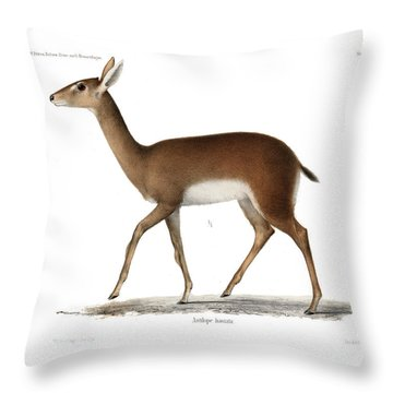 Throw Pillow featuring the drawing Oribi, A Small African Antelope by J D L Franz Wagner