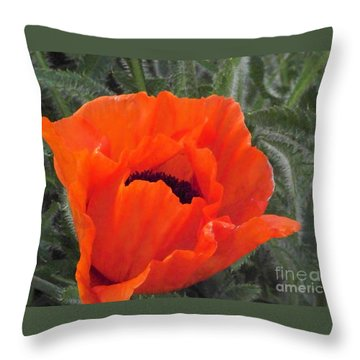 Throw Pillow featuring the photograph Oriental Poppy by Charles Robinson