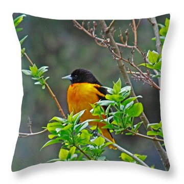 Oriole On The Lilac Throw Pillow