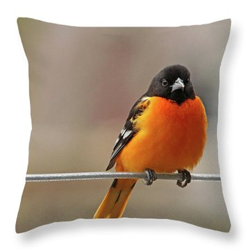 Oriole On The Line Throw Pillow
