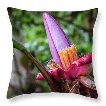 Ornamental Banana Flower Throw Pillow by Kathy McClure