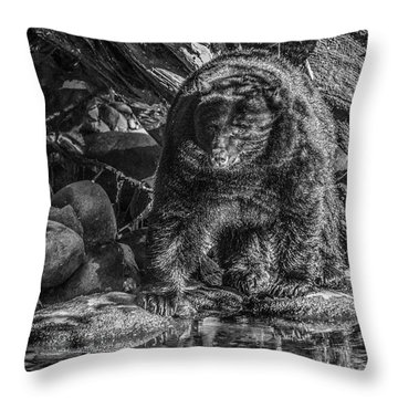 Oservant Black Bear  Throw Pillow