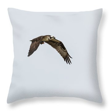 Throw Pillow featuring the photograph Osprey 2017-2 by Thomas Young