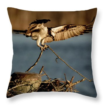 Osprey 2017-3 Throw Pillow