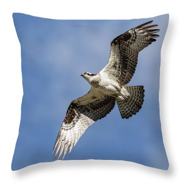 Throw Pillow featuring the photograph Osprey 2017-3 by Thomas Young