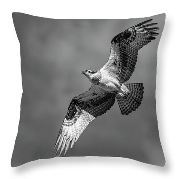 Throw Pillow featuring the photograph Osprey 2017-4 by Thomas Young