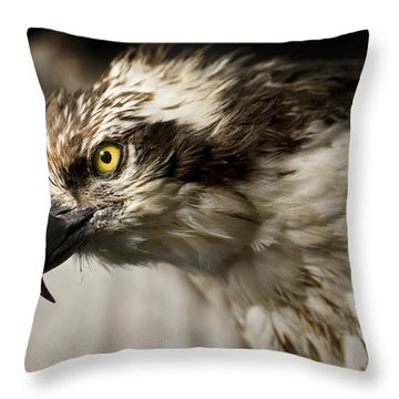 Osprey Throw Pillow by Adam Romanowicz