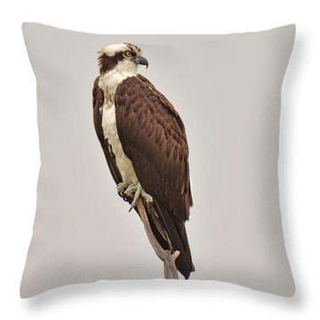 Osprey Throw Pillow by Alan Lenk
