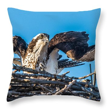 Osprey Alert Throw Pillow