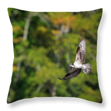 Osprey Throw Pillow by Bill Wakeley