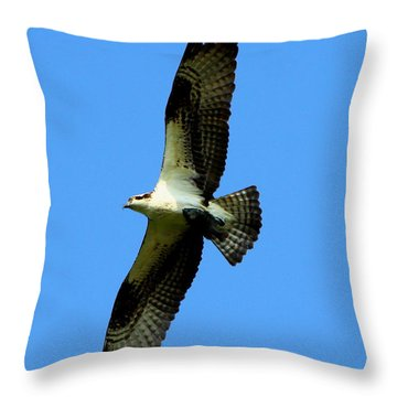 Osprey Carrying A Fish Throw Pillow by Barbara Bowen