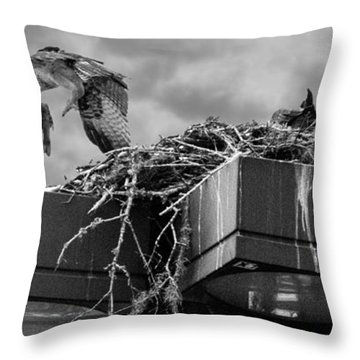 Osprey Carrying Fish To Nest Throw Pillow